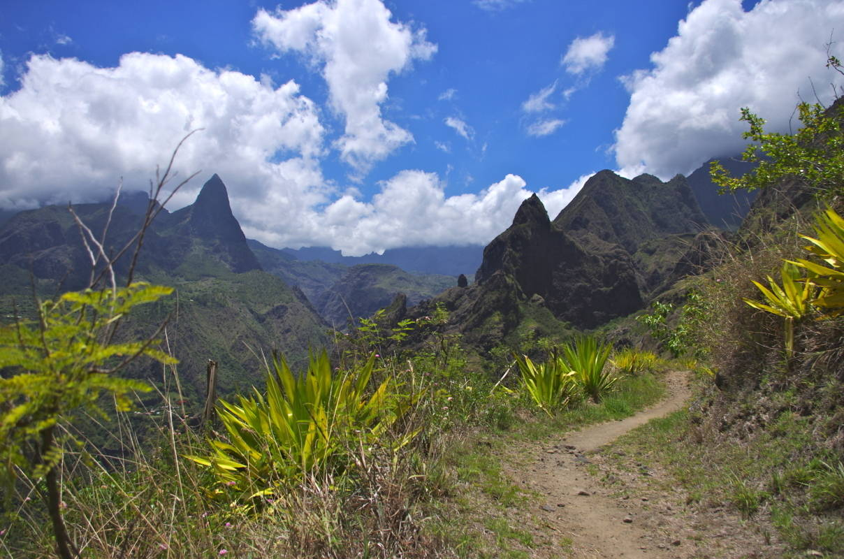 Forecasting Pioneers in Reunion Island